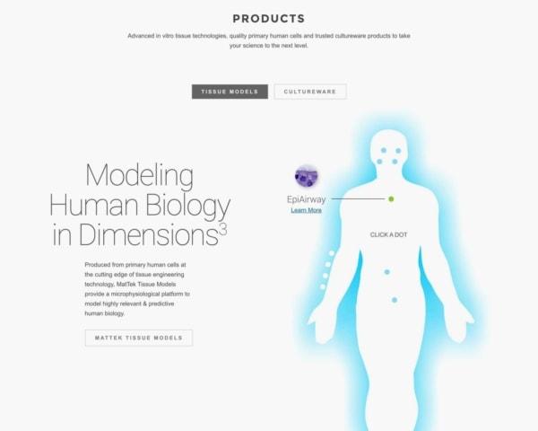 Biotech Web Design Example: MatTek Preview.