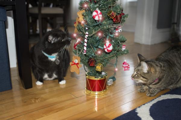 two cats named Ella and Hazel