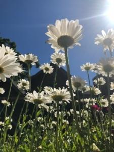 Flowers in Mary's garden.