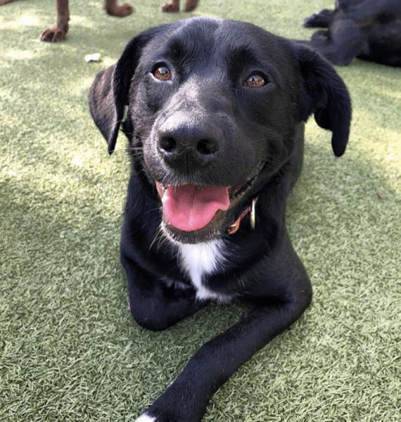 Stephanie's dog Riker enjoying the outdoors.